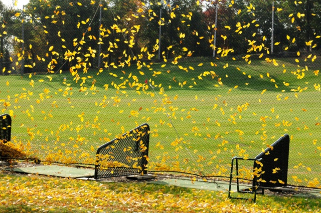Leaves falling heavily on driving range hitting stations