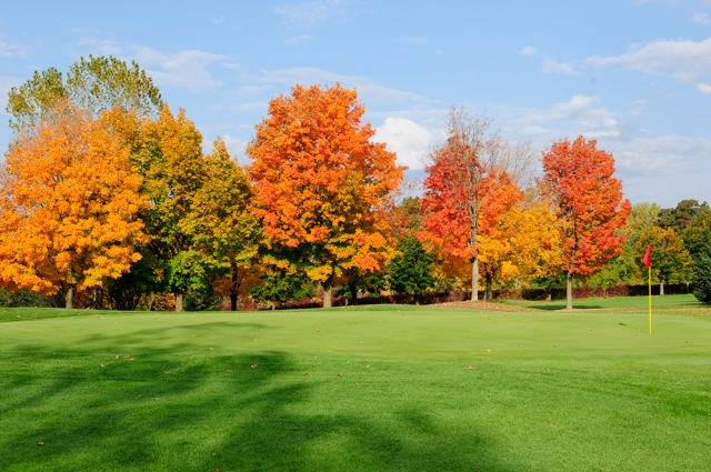 Trees in full autumn color along golf green
