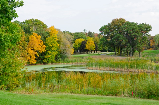 Pond surrounded by tall grass and trees with adjoining fairways