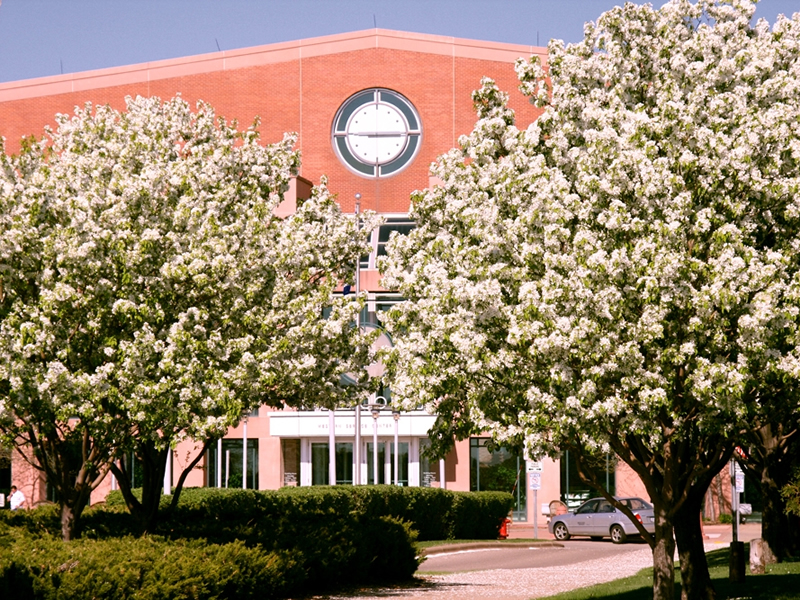 Library building with flowering trees
