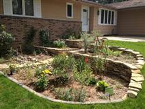 Front Yard Native Plant and Rain Garden